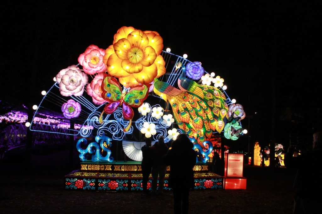 chasing lights nc chinese lantern festival got the travel bug too. Black Bedroom Furniture Sets. Home Design Ideas